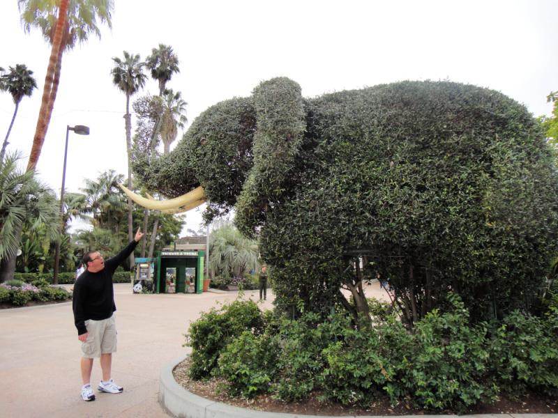 giant elephant hedge at entrance to San Diego Zoo