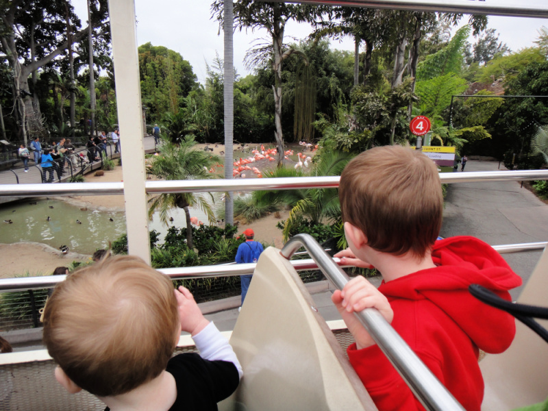 two kids looking through the railings of a bus at a flock of flamingos