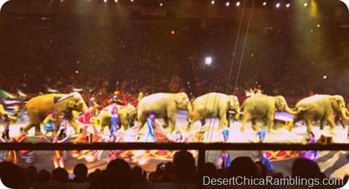 Tucson Circus