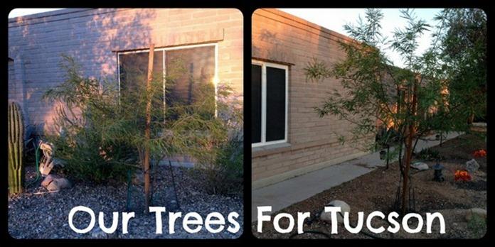 Trees4Tucson1-001