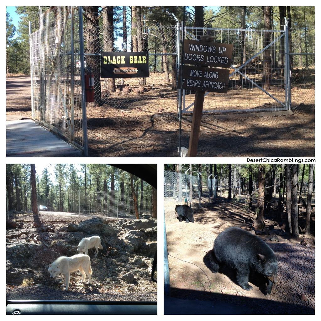 Bearizona Black bears and Wolves