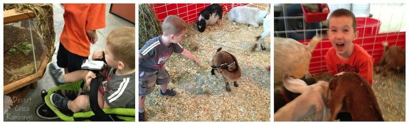Pima County Fair Animal Encounters