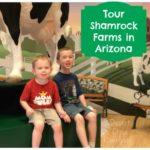 Shamrock Farms Tour {Travel Tuesday}