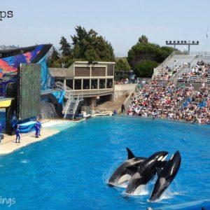 10 SeaWorld Tips {Travel Tuesday}