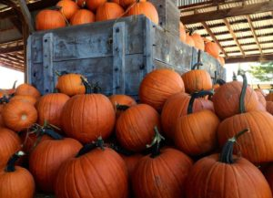 Apple Annies Pumpkins