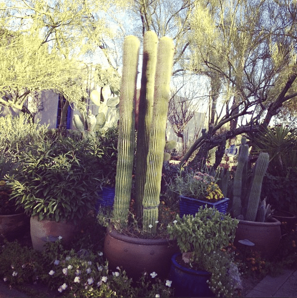 The Garden at the Hacienda Del Sol