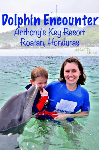 Dolphin Encounter Anthony's Key Resort Roatan Honduras