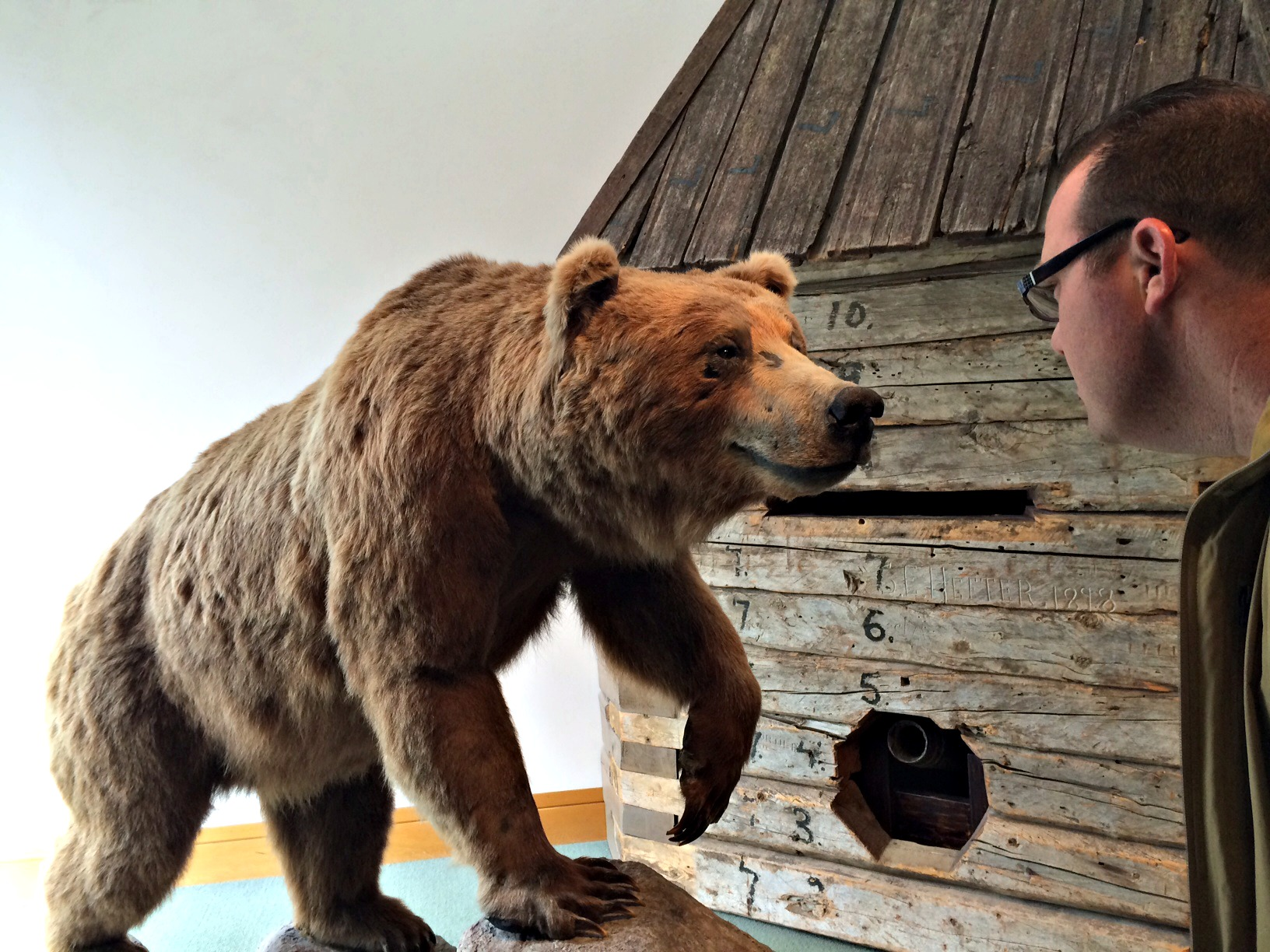 Bear at the Anchorage Museum