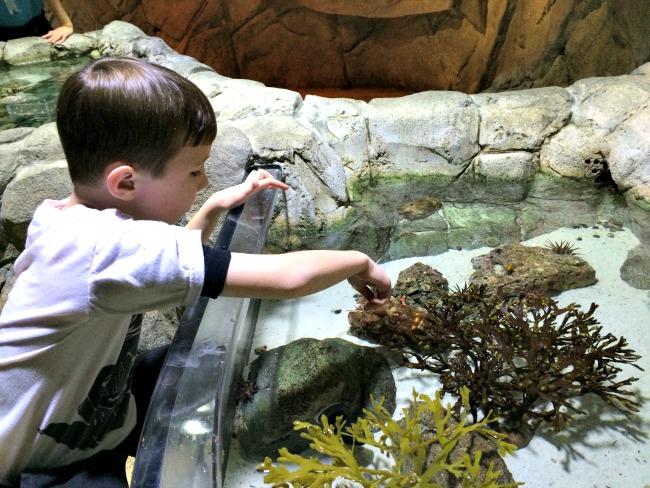Toy Alternatives for Christmas Museum and Aquarium Membership