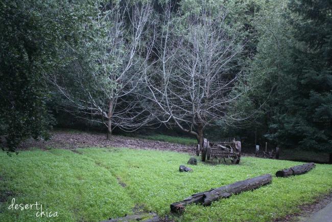 Skwalker Ranch Grounds