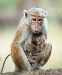 Monkey Kingdom Review