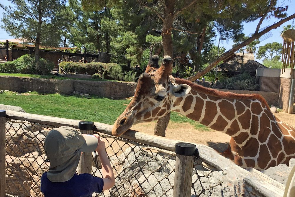Up Close with Giraffes at Reid Park Zoo