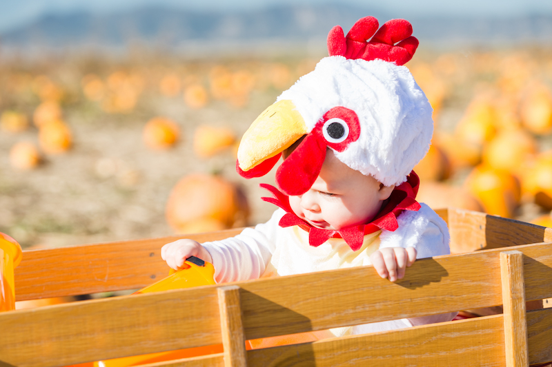Baby Chicken Costume in a Pumpkin Patch