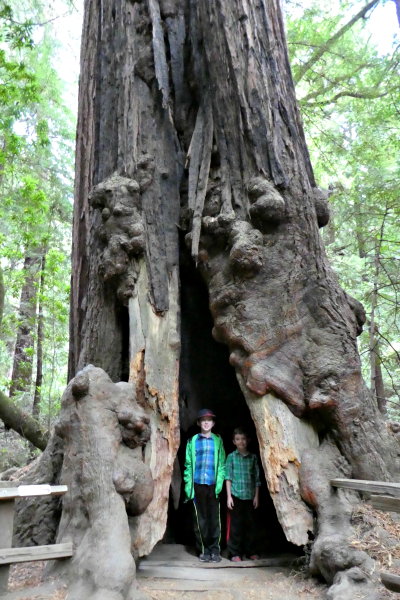 Private Muir Woods Tour: Why It's Worth The Splurge