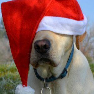 How Santa Can Bring A Puppy