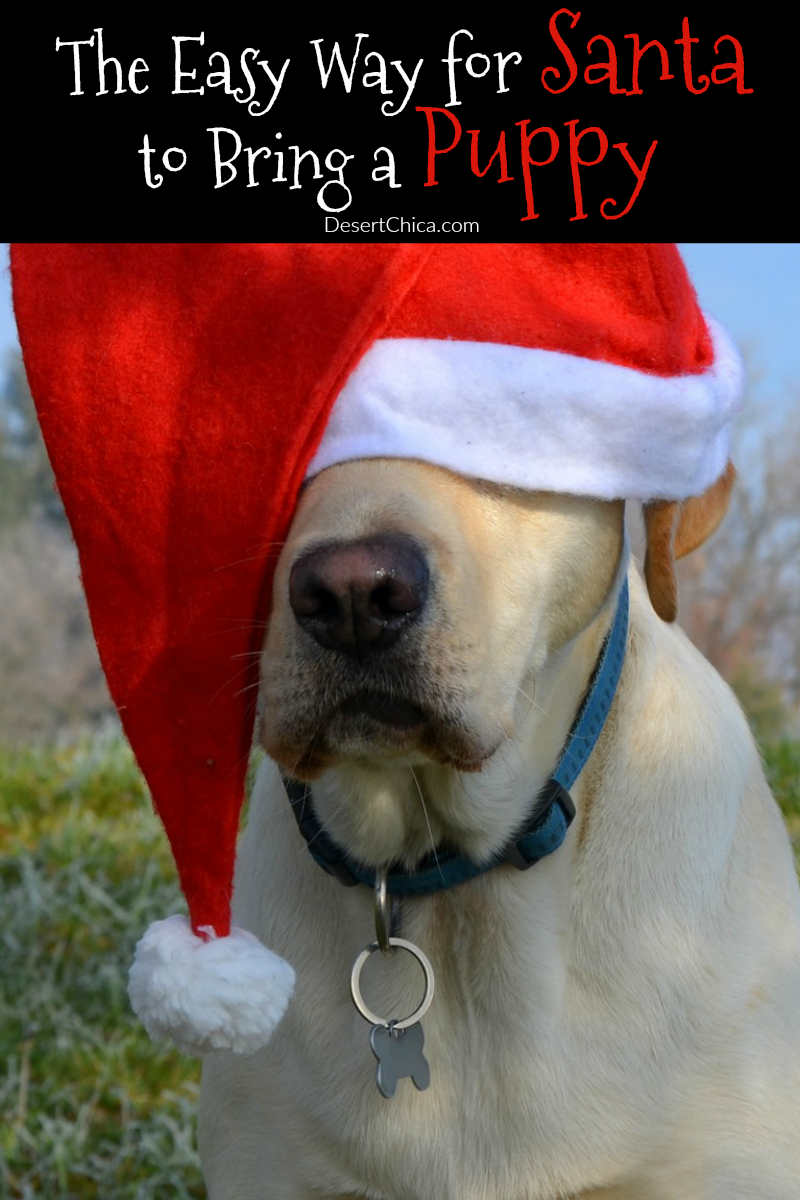 Are you planning a furry addition to your family this Christmas? Check out how Santa can bring a puppy this year with a little help.