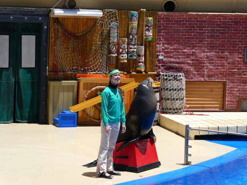 Animals shows at Sea World San Diego make it a sure fire hit on a trip to southern California with kids