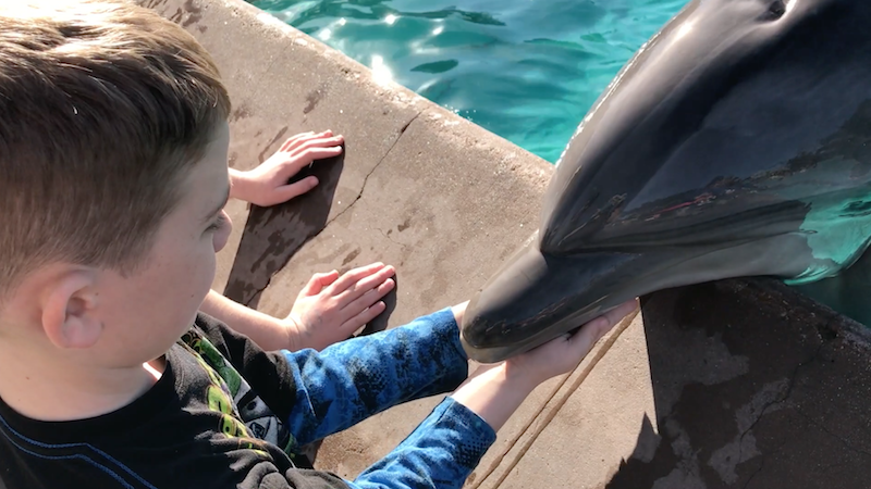 Dolphin Encounter at Sea World San Diego is an extra special idea when you visit Southern California with kids