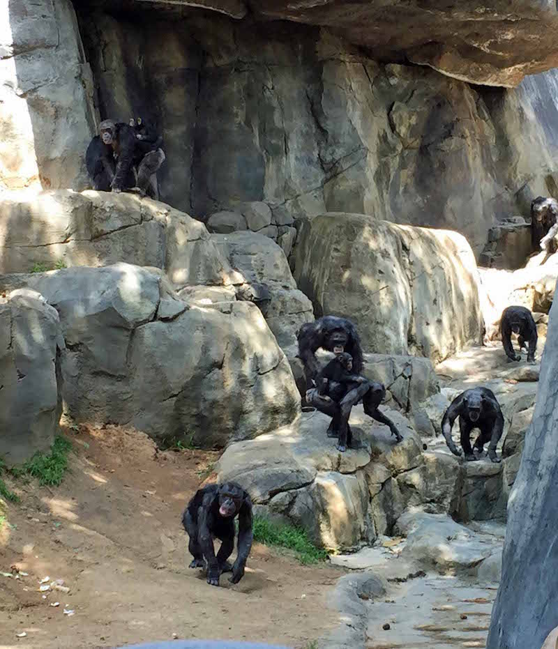 Monkeys at the los Angeles Zoo is a great stop on a trip to Southern California with kids